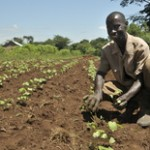 The Smallholder Farmer is the Base of the Pyramid
