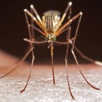Malaria vaccines: The long war