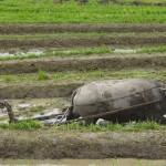 Agricultural Mobile Finance