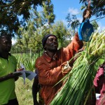 Facilitating participatory research: Scientists train farmers and extension officers in Babati-Tanzania on forage data collection