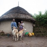 Improved small ruminant value chains in Ethiopia focus of new Livestock and Fish project