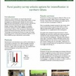 Rural poultry survey unlocks options for intensification in northern Ghana