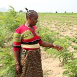 Barking up the right tree: Multipurpose trees help Tanzania smallholders build a resilient farming system
