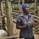 Pig value chains in Uganda – farmer case stories