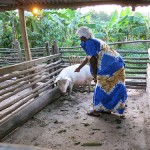 Livestock and Fish pig value chain activities in Uganda