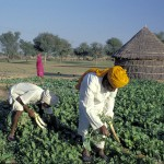 Should governments support the development of agricultural insurance markets?