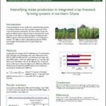 Intensifying maize production in integrated crop-livestock farming systems in northern Ghana