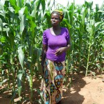 Getting technologies out to farmers using innovative approaches: the Africa RISING – SIMLEZA project