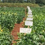 Finding the best seeds to match Africa's needs