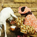 International Women's Day 2016: What issues are central to agricultural development for women?
