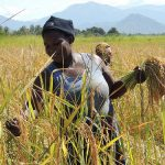 Boost for Africa's smallholder farmers' access to sustainable agricultural technologies as USAID announces $ 50 million Africa RISING Phase 2