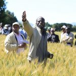 Africa RISING partnerships increase scaling out of agricultural technologies in Ethiopia