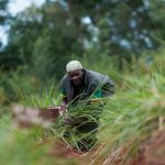Grass? How an unlikely weapon can help farmers beat drought in Africa