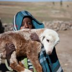Livestock key to ending poverty and hunger in developing countries