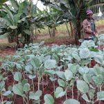 Tanzania farmers embrace vegetable farming to access more high-value markets and improve nutrition