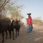 ILRI develops framework for integrating gender in livestock genetic improvement programs